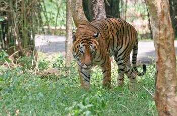 Bannerghatta National Park, Bangalore