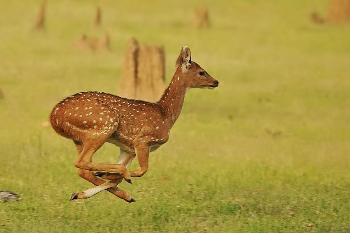 Kabini India  city photos gallery : Kabini Wildlife Sanctuary, Kabini Karnataka Outing Wildlife ...
